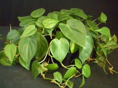 Caring for House Plants and Spiritual Practice | emerging by Lou ...